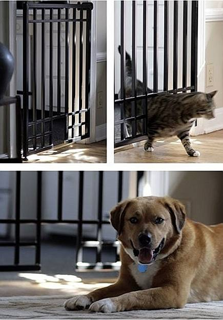 custom iron pet friendly gate via Atticmag