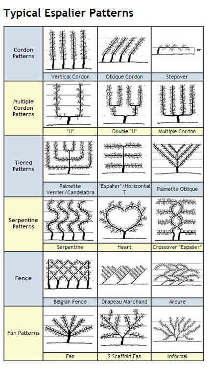 chart of espalier shapes - Espalier Services via Atticmag