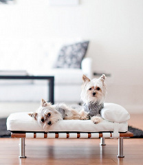 dogs on a modern custom upholstered daybed