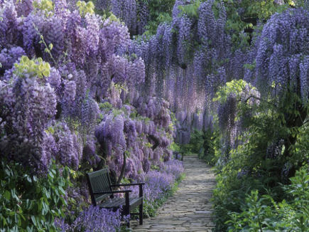 wisteria in bloom in Germany - pixdaus via atticmag