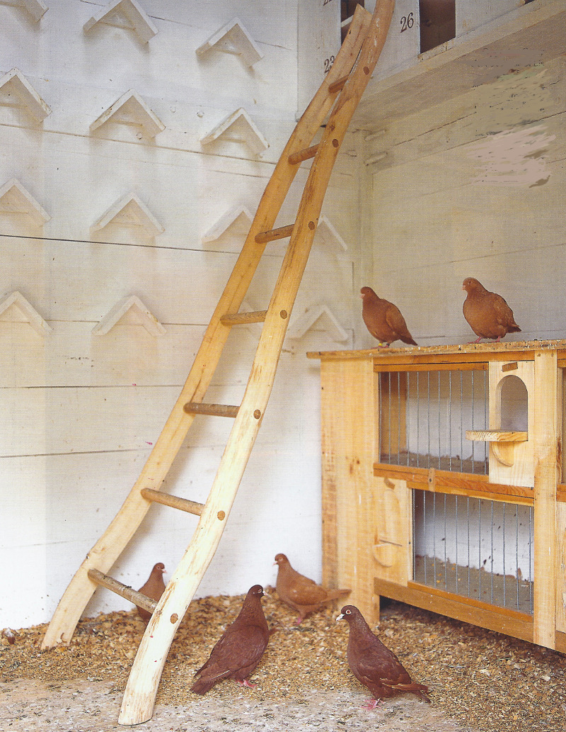 handmade oak and ash ladder inside the dovercote gives access to nesting boxes - World of Interiors via Atticmag