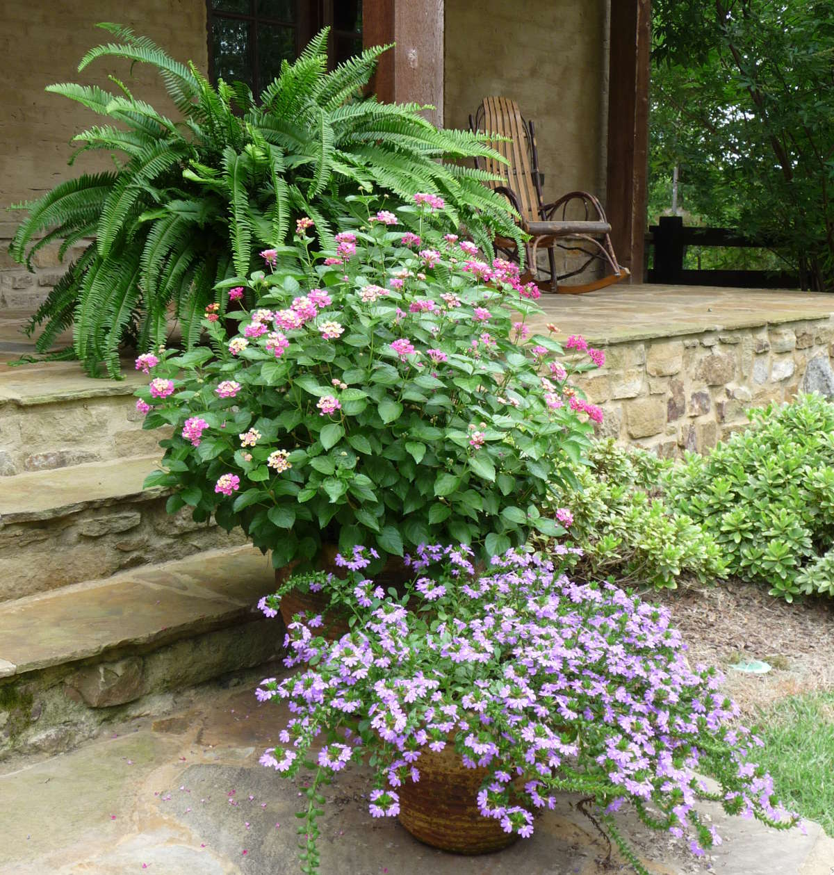 cottage gardening - terra cotta pots with flowering annuals and ferns - Atticmag
