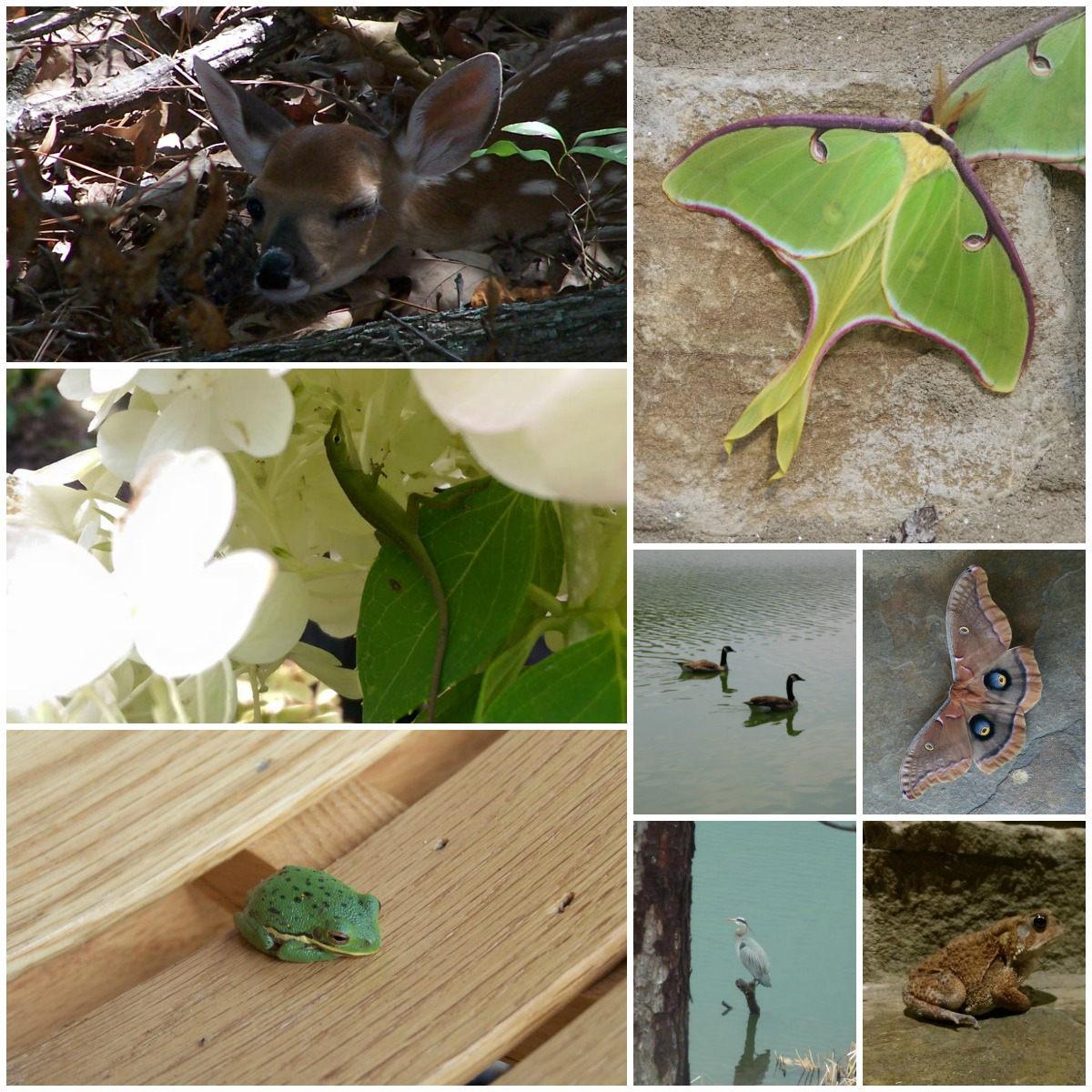 cottage gardening - various wildlife seen in my Alabama garden - Atticmag