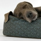 blue stain resistant Crypton pet bed with dog print - Hilton to Home via Atticmag