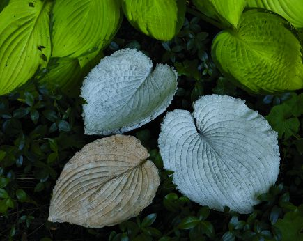 cement hosta leaves from Woodland Style via Atticmag