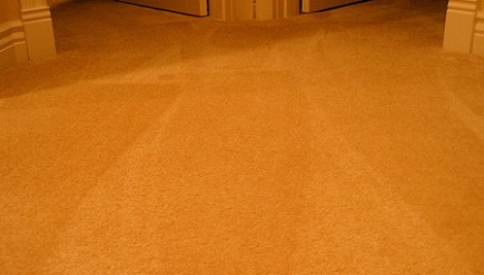 rug color changes - detail of wall to wall carpet nap color variations due to vacuuming - flickr via Atticmag