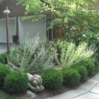 gardening - foundation planting with spirea and russian sage at a Hudson Valley summer house - Atticmag