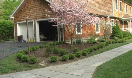 gardening - newly planted front foundation bed with japanese boxwood, roses and a flowering dogwood and viburnum - Atticmag