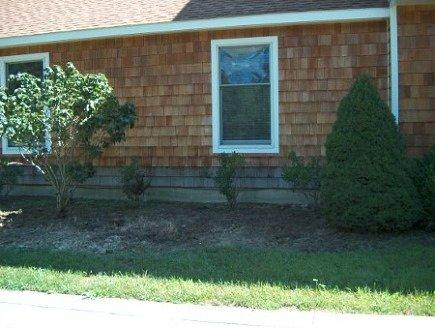 gardening - original foundation bed with viburnum tree before replanting - Atticmag