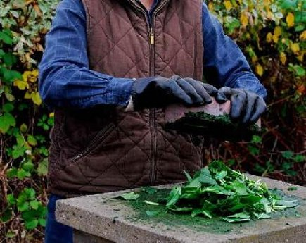 woad blue leaves being processed - woad blue.org via atticmag