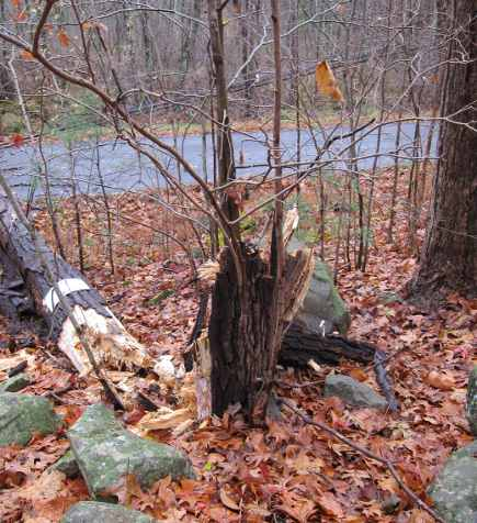 power outage - base of a broken oak tree that took down a power line on our street - Atticmag