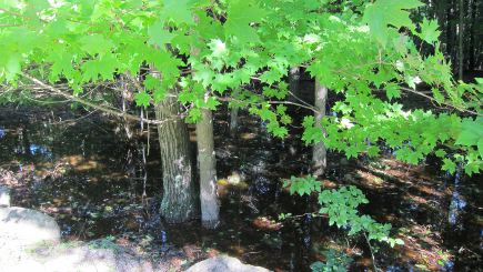 power outage - a lake that formed in a ravine near the driveway after the storm - Atticmag
