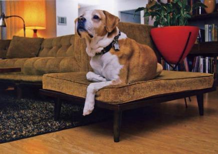 dog beds - custom mid-century modern dog bed from Atomic Ranch - Dog Milk via Atticmag