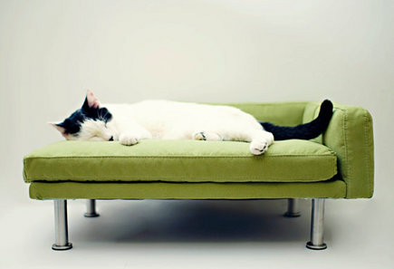 A Collection Of Modern Pet Furniture Includes Sleek Lines And Chic Colors.