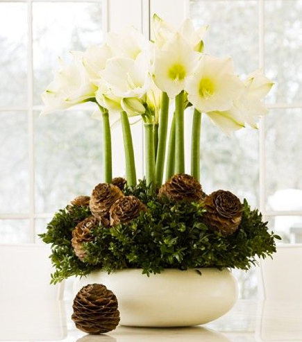 Informal Christmas flowers - white amaryllis with pinecones and greenery - house and home via atticmag