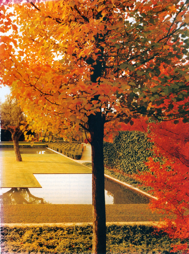 fernando caruncho - maple trees in autumn on the border of Caruncho garden - house & garden via atticmag