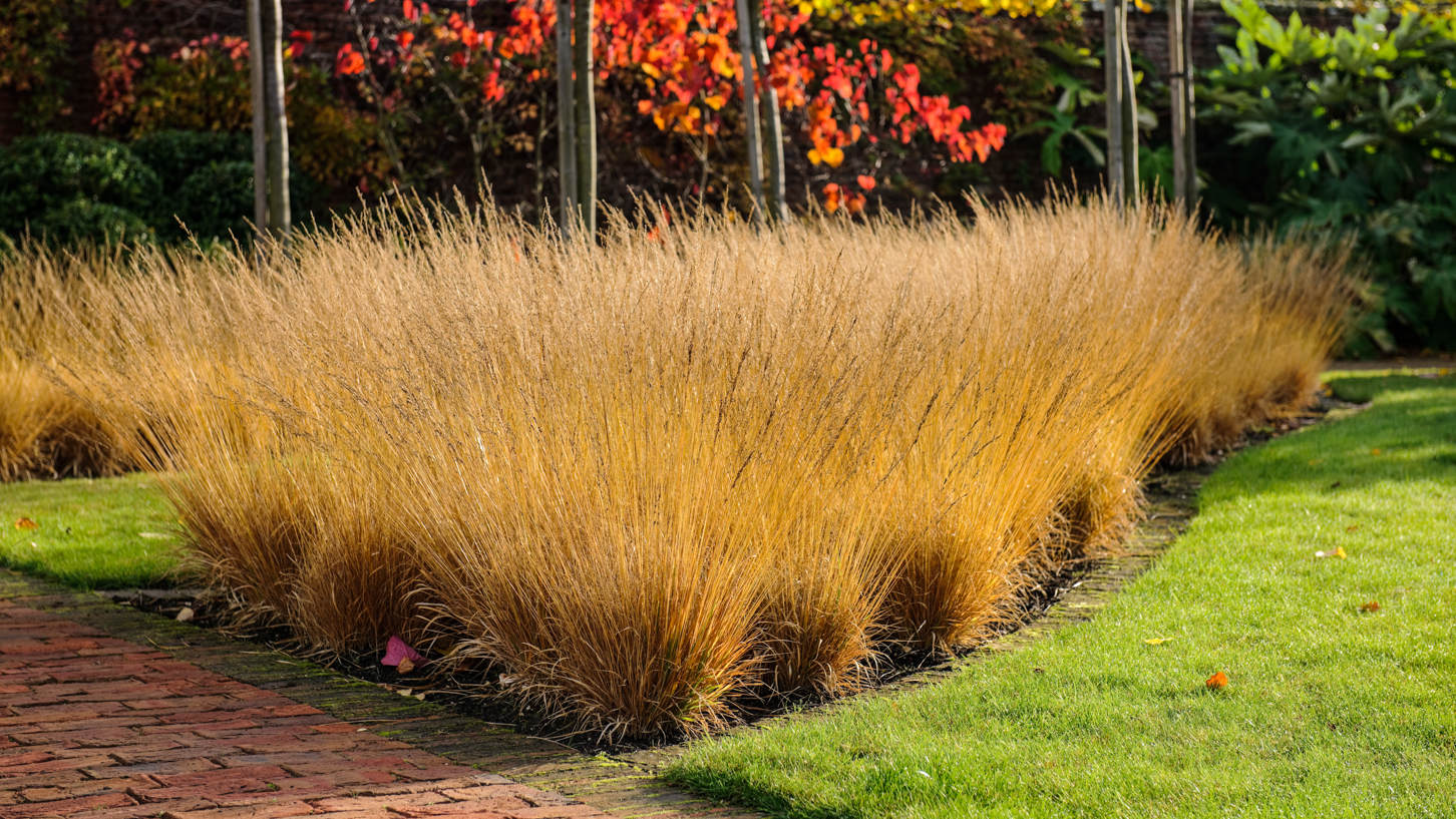 walled gardens - drifts of Molinia caerulea ssp caerulea 'Poul Petersen' in the fall in the Scampston walled garden - Jason Ingram via Atticmag