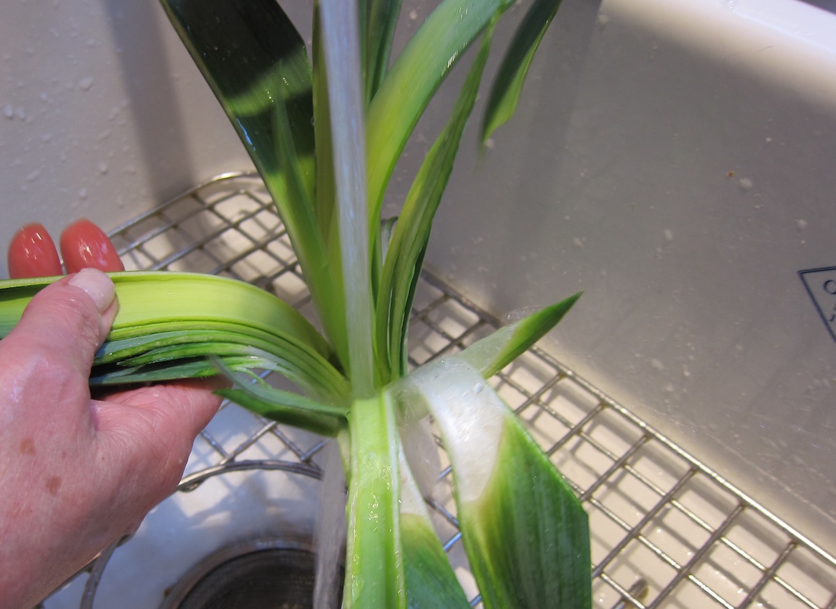 two soups in one bowl - rinsing sand out of the split leek - Atticmag
