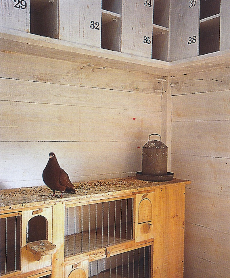 dovecote breeding boxes to cage birds for breeding -World of Interiors via Atticmag